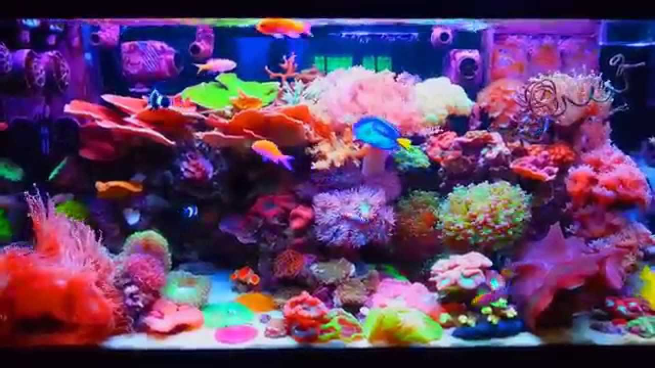 LPS SALTWATER TANK REEF AQUARIUM - YouTube