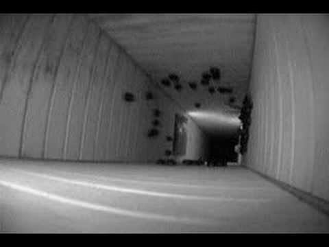 13 Chimney Swifts Going To Roost And Inside Youtube