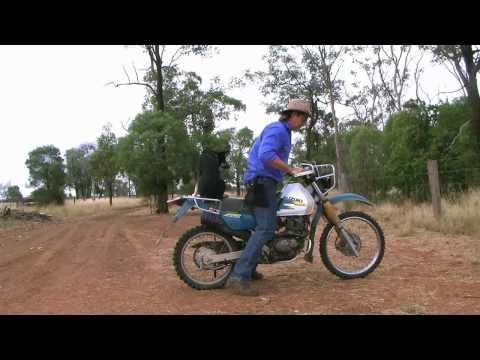 Training Dog to Ride on Bike - Part 2