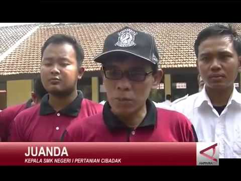 SMKN 1 Cibadak MOPD 2015 Penanaman 1 juta Bibit Cabe