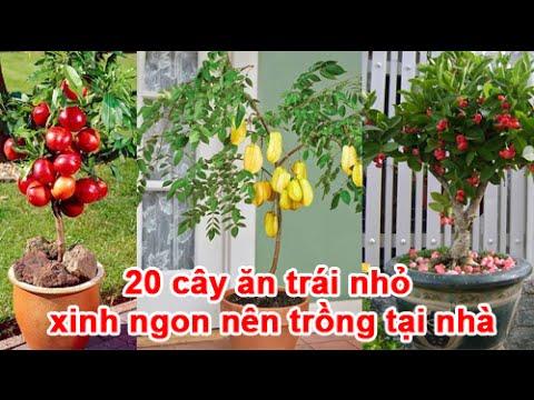 20 cây ăn trái nhỏ xinh ngon nên trồng tại nhà