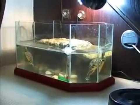 2 tartarughe d 39 acqua entrano per la prima volta nel for Laghetto termoformato per tartarughe