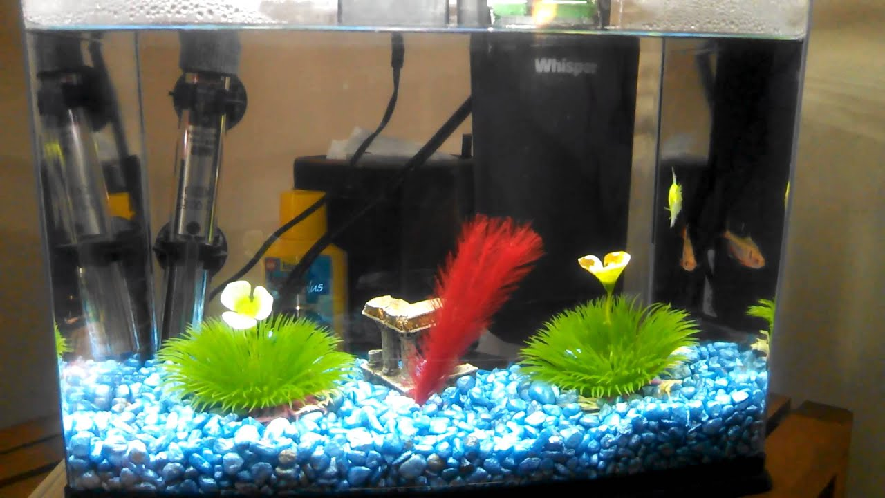 2 5 gallon fish tank update youtube for Two gallon fish tank