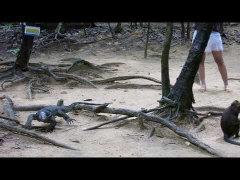 Monkeys and monitor lizards in Puerto Princesa MVI 4344