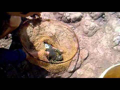 Tra Vinh, cu Zen bat duoc cua khong lo nang 5kg.