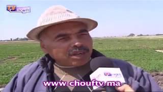 شهادات طريفة لمغاربة شافو الجنون | روبورتاج