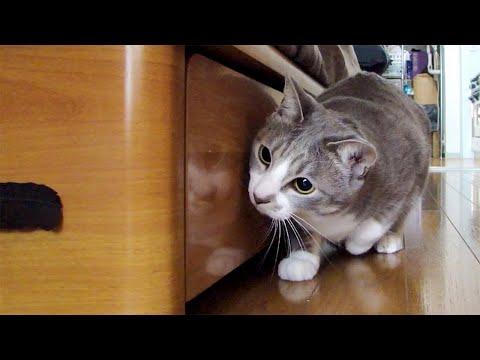 Stalking Cat 2 , 動いてないもん。 ブログ・モア*モアレ http://moire.lowdope.com/
