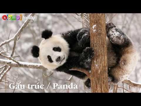 Learning Vietnamese - Animals - Dạy bé học tên con vật (bằng hình ảnh) - Phần 1 [kidmolfamily]