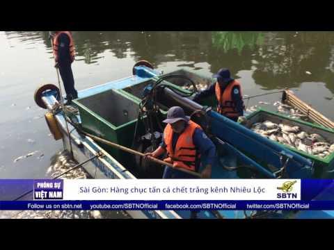 18/05/16 - PHÓNG SỰ VIỆT NAM: Hàng chục tấn cá chết trắng kênh Nhiêu Lộc - Sài Gòn