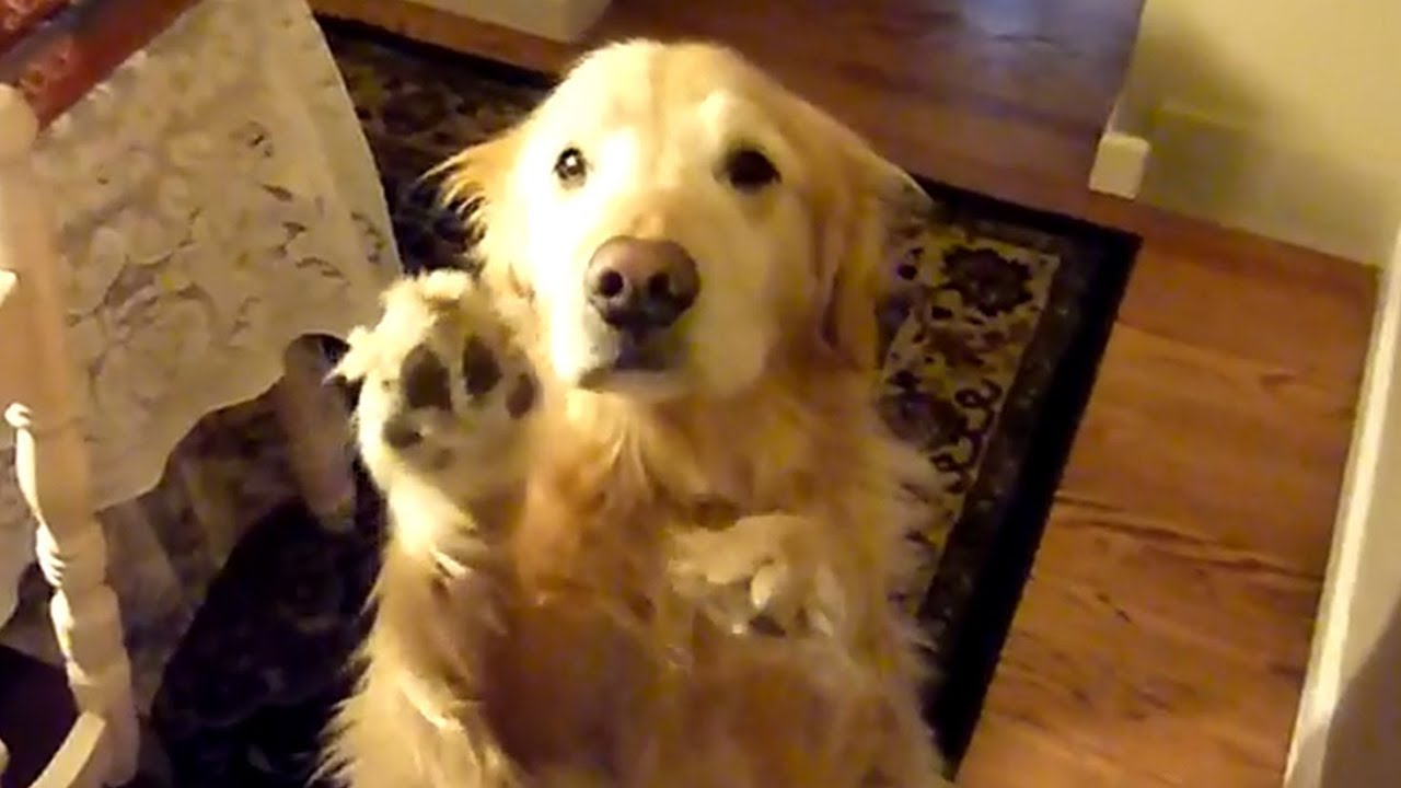 Cute Dogs Begging Eyes Vines