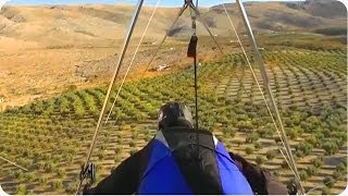 Hang Glider Lands In Tree How To Make Olive Oil