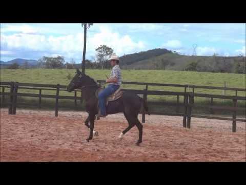 doma racional, égua mangalarga marchador adestrada, cavalos adestrados