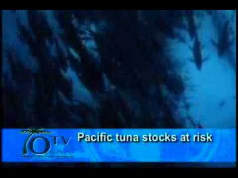 Pacific Tuna Stocks At Risk