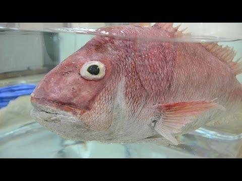 宇宙スイスイ、魚ロボ 長崎大の研究室を訪ねて