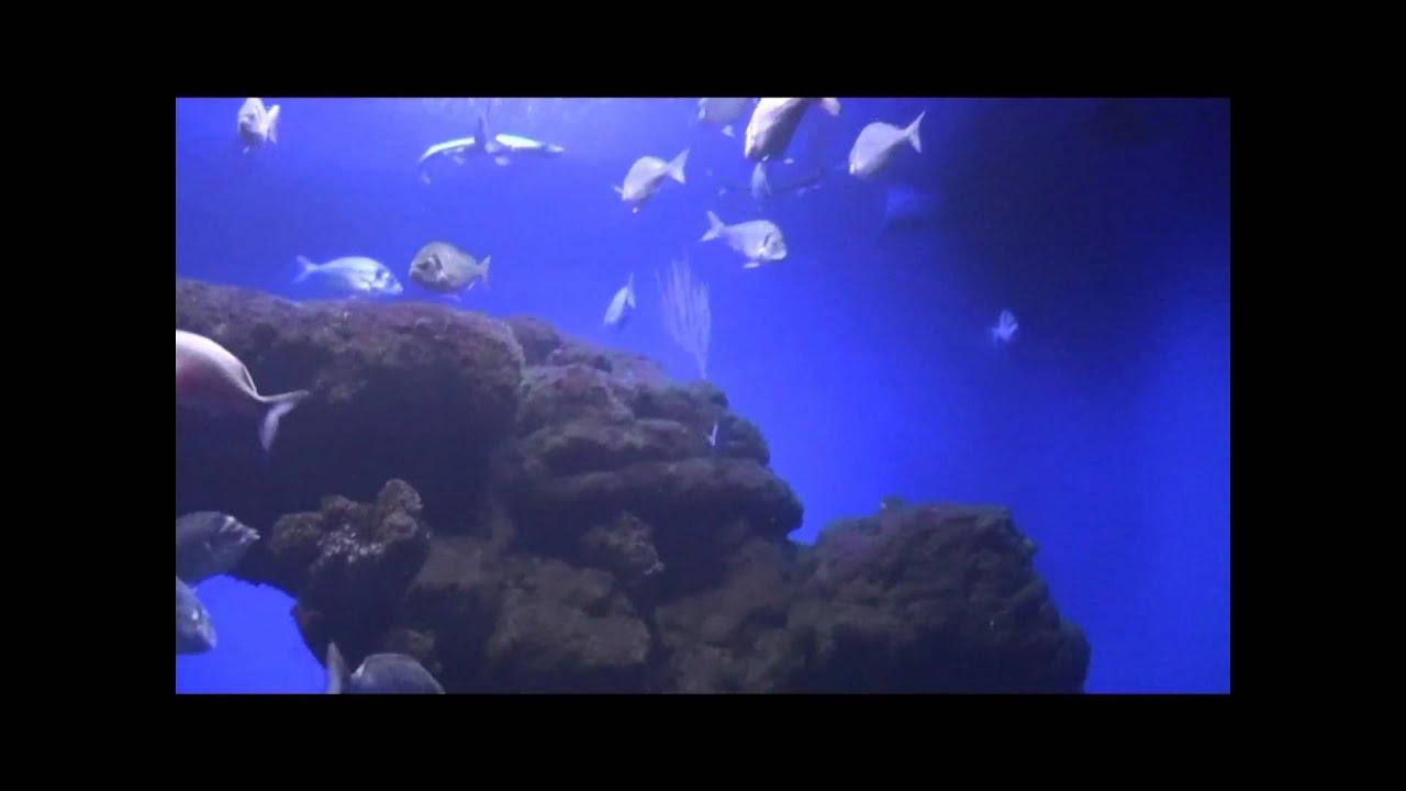 Aquarium fische unter wasser salzwasser youtube for Salzwasser aquarium fische