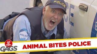 Skrytá kamera - pes uhryzne policajta