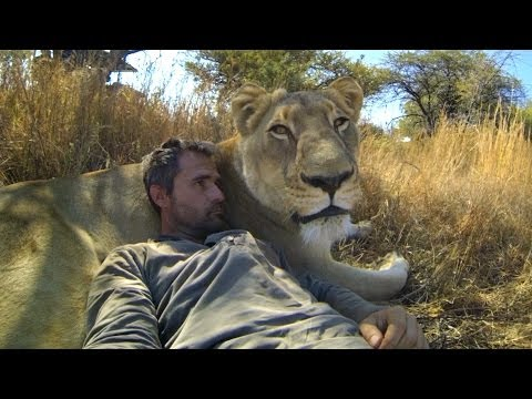 Thumbnail of video GoPro: Lions - The New Endangered Species