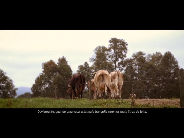 Ordenha Robotizada a Pasto | Fazenda CoiCoi, Chile