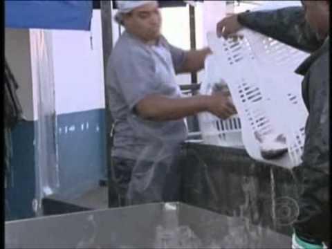 Cadeia Produtiva do Surubim Pintado - Globo Rural