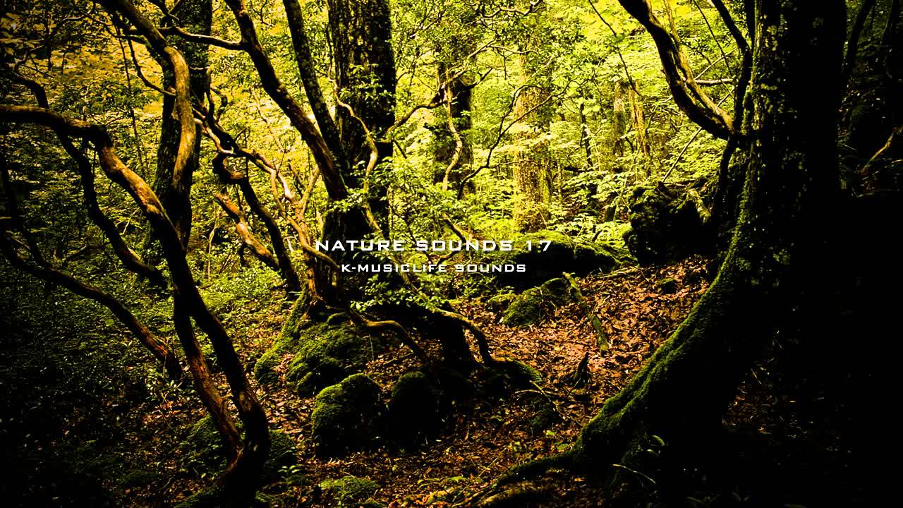 Nature Sound 17 - THE MOST RELAXING SOUNDS -