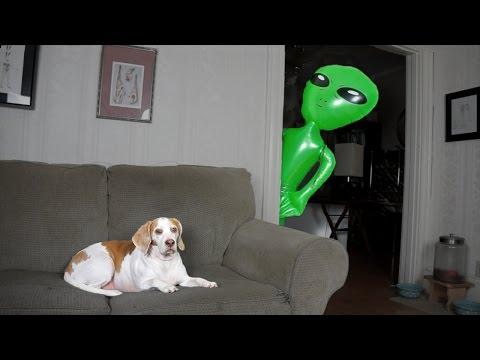 Dog Pranked with Alien: Funny Dog Maymo