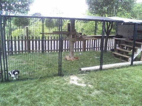 Easy To Make Outside Cat Enclosure With PetSafe Dog Kennels And Our