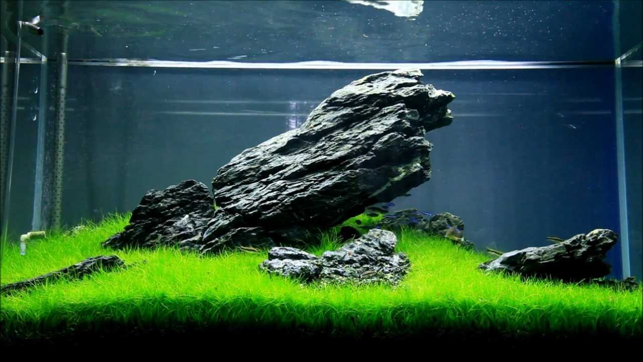 Just Aquascaping - Iwagumi - YouTube