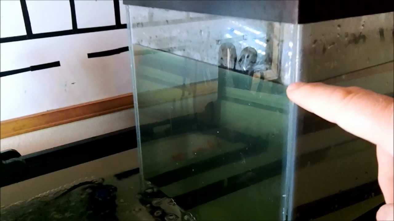 Aquaponics upside down fish tank youtube for Google fish tank mrdoob