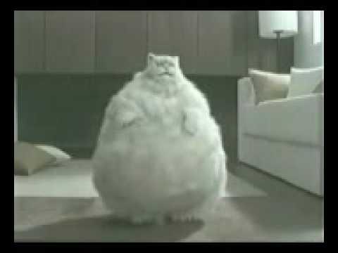 I Was A Big Fat Cat Lyrics
