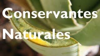 Cómo Conservar El Champú Casero De Aloe Vera (contra