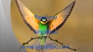 Radio Simbirtuu: Walaloo Beekan Gulummaa; Kabaja Yaadannoo Aanollee fi Calii-Calanqoo Naayirobii; fi Aadde Addis Dheeressaa – Waldaa Dubartoota Oromoo-UK irratti