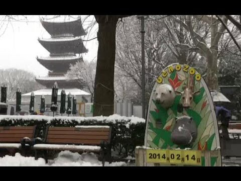 JAPAN SNOW (Heavy snow warnings issued for Tokyo, over hundred flights cancelled.)
