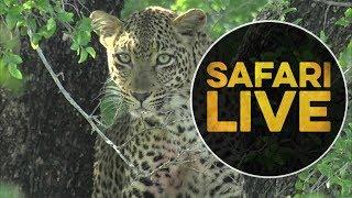 safariLIVE - Sunrise Safari - May, 17. 2018