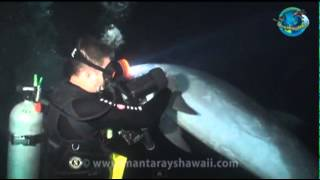 Divers: Dolphin Rescue Caught on Tape