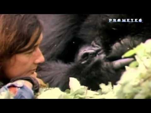 Dian Fossey, la donna dei gorilla