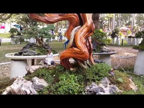 Thiên nhiên Cây cảnh Bonsai đẹp - T2