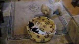 Cat And Dog Funny (get Out Of My Bed) 猫逗狗