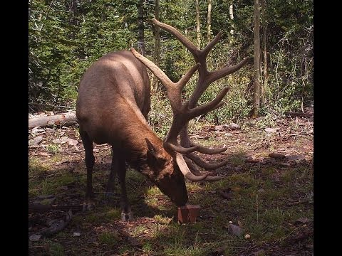 2014 Big Elk Utah