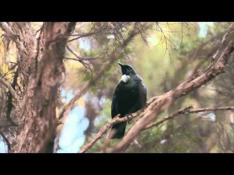 Orokonui Ecosanctuary | Insiders Dunedin