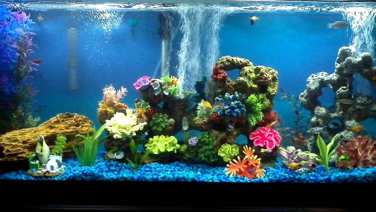 Freshwater aquarium fish community community aquarium for Best community fish