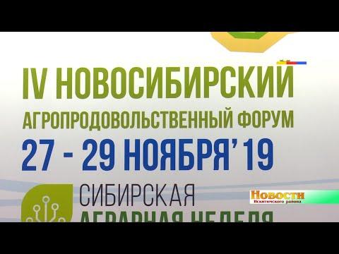 Живыми утятами и цыплятами привлекла всех презентация Искитимского района на 4-ом Новосибирском агропродовольственном форуме