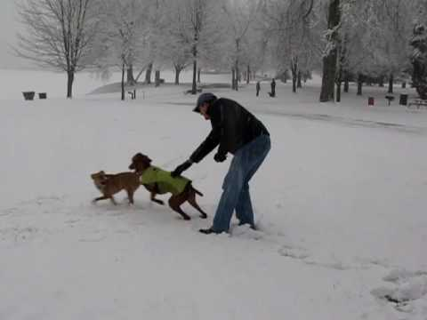 Laszlo and Juno Enjoy an Atlanta Snow