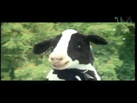 Quảng Cáo Sữa Vinamilk - Bò cười té ghế