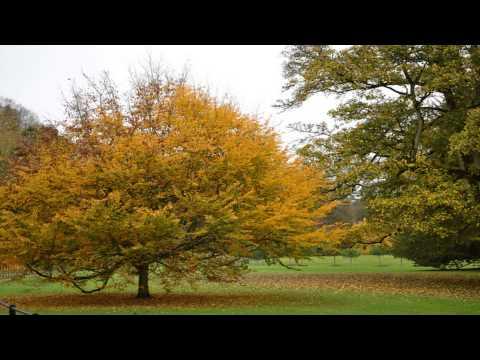 Batsfors Arboretum Ealing London