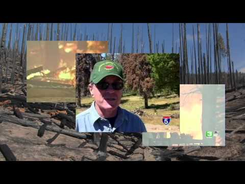 Part 2/12 The Notable Increase in Forest Fires and Decay