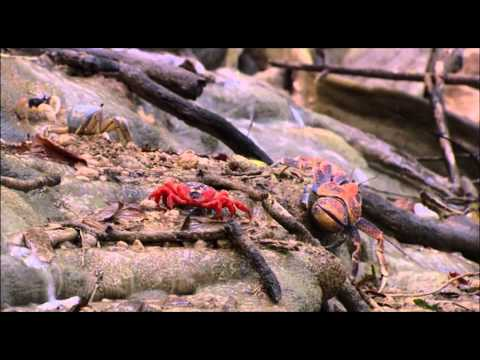 Crabbest Song 2014