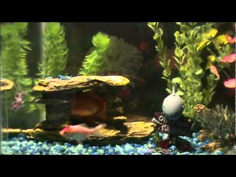 10 gallon fish turtle tank youtube for Google fish tank mrdoob