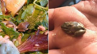 Woman Finds Tiny, Live Frog in Her Salad and Kept It as a Pet