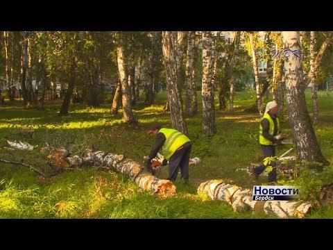 Аварийные деревья представляют серьезную опасность для горожан