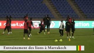 Seance d'entrainement des lions a Marrakech (Maroc)
